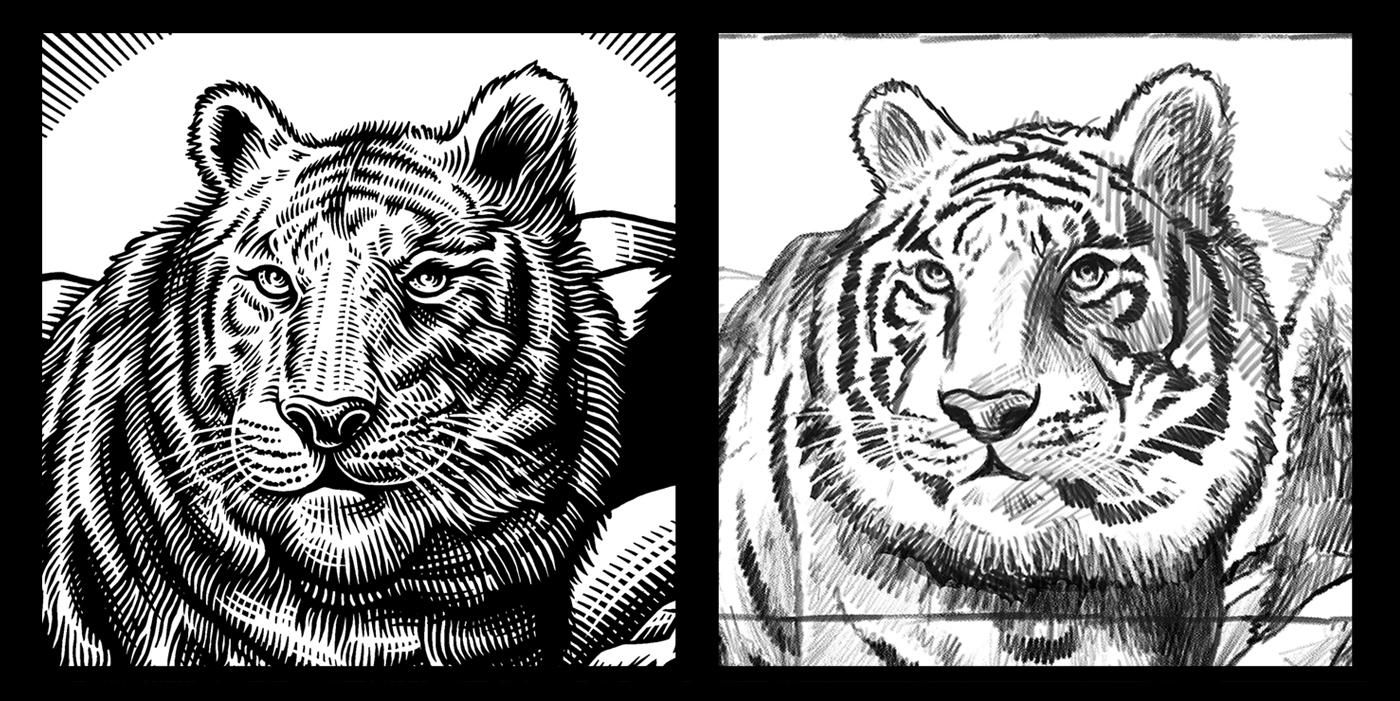 beasts_tiger_sketch